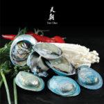 QWEHLI-BLUE-ABALONE-03---600-pxl
